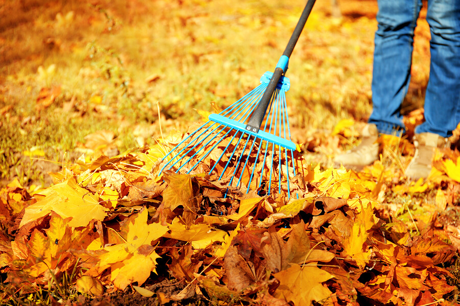 Edmonton Yard Care for Fall